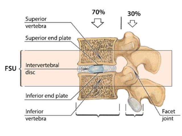 espina-dorsal